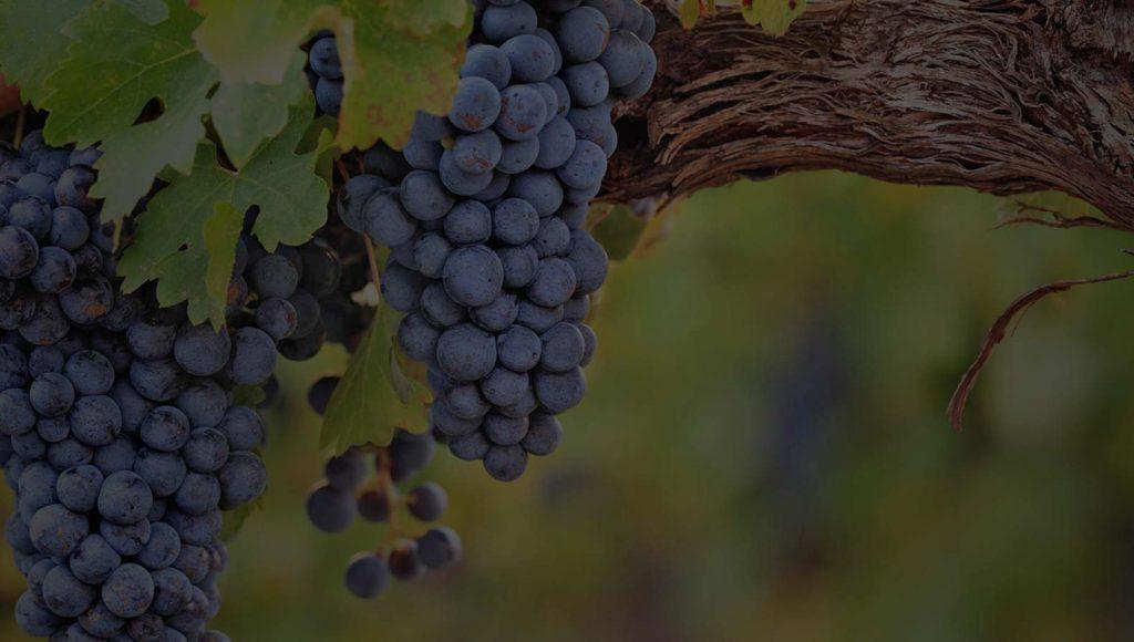 ThemeSliders_Vines